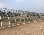 黄河滩日光温室
