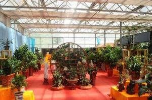 花卉市场温室骨架